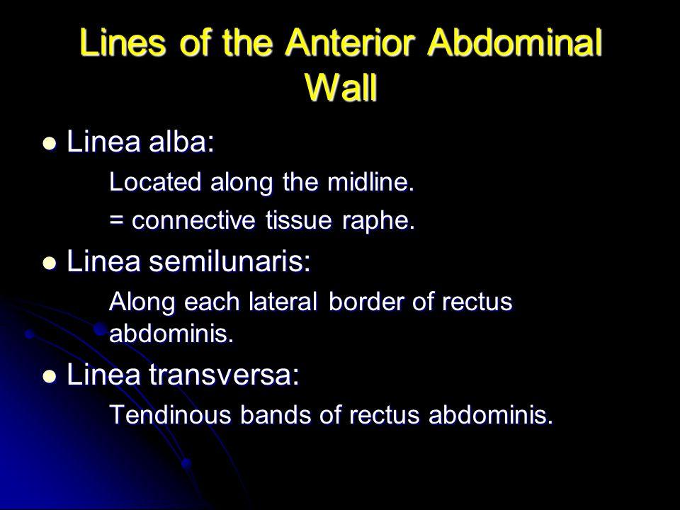 Anterior Abdominal Wall Veins External iliac vein: External iliac vein: Receives from epigastric and deep circumflex iliac veins.