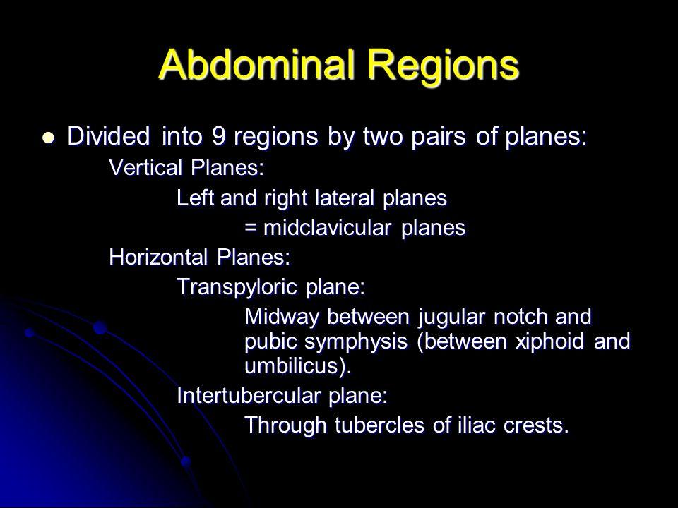 Arterial Supply Above Umbilicus Posterior intercostal arteries 10-11.