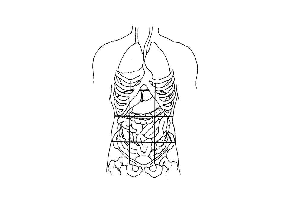 Abdominal Regions Right and left hypochondriac: Right and left hypochondriac: Contain liver Epigastric: Epigastric: Contains: liver, stomach, pancreas Right and left lateral (lumbar): Right and left lateral (lumbar): Right contains ascending colon.