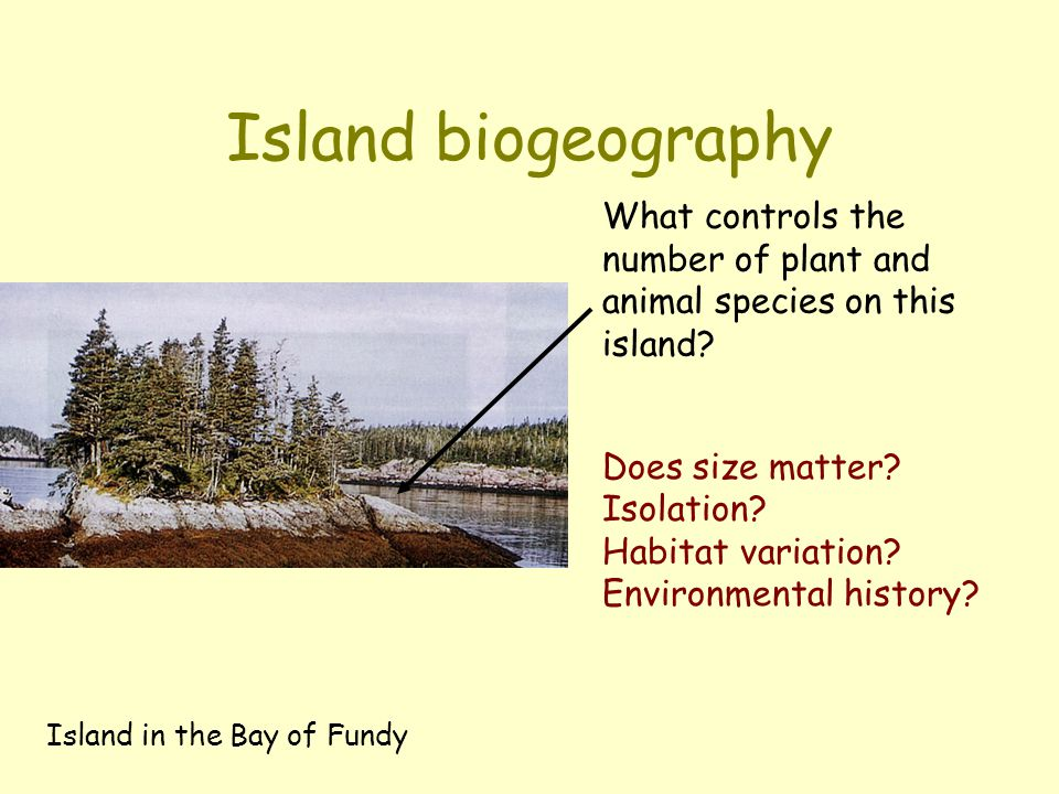 Island biogeography Island in the Bay of Fundy What controls the number of plant and animal species on this island? Does size matter? Isolation? Habit