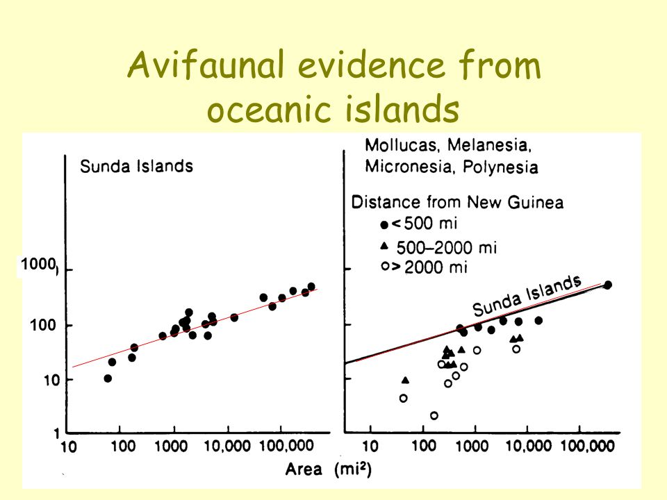 Avifaunal evidence from oceanic islands 100 1000