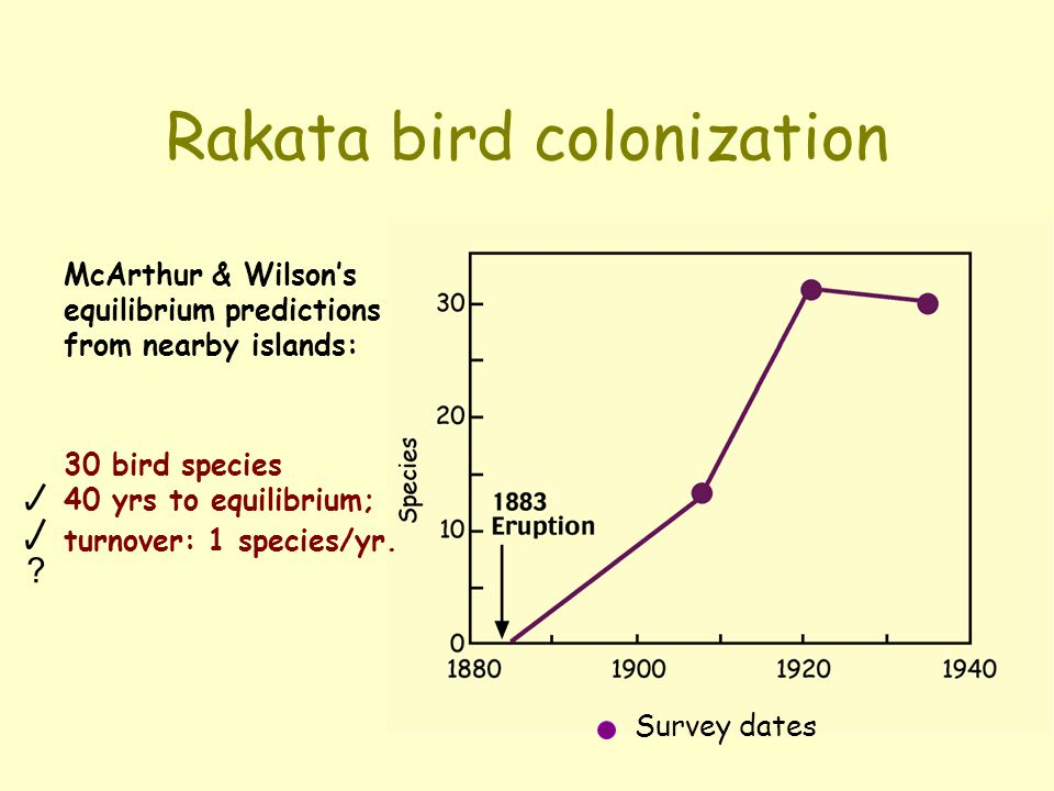 Rakata bird colonization McArthur & Wilson's equilibrium predictions from nearby islands: 30 bird species 40 yrs to equilibrium; turnover: 1 species/y