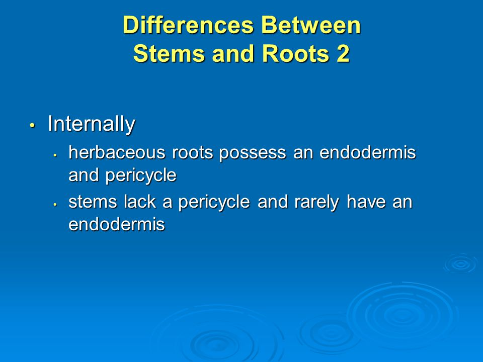 Differences Between Stems and Roots 2 Internally Internally herbaceous roots possess an endodermis and pericycle herbaceous roots possess an endodermi