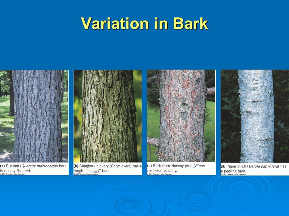 Variation in Bark
