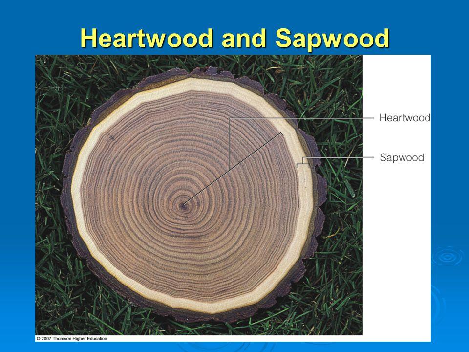 Heartwood and Sapwood