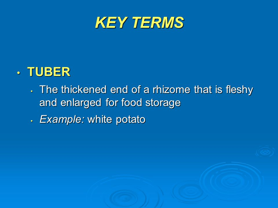 KEY TERMS TUBER TUBER The thickened end of a rhizome that is fleshy and enlarged for food storage The thickened end of a rhizome that is fleshy and en