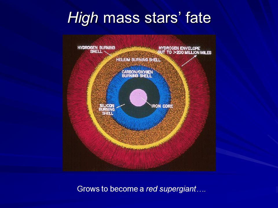 High mass stars' fate Grows to become a red supergiant….