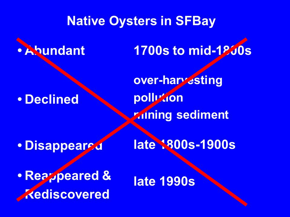 Native Oysters in SFBay Abundant Declined Disappeared Reappeared & Rediscovered 1700s to mid-1800s over-harvesting pollution mining sediment late 1800s-1900s late 1990s