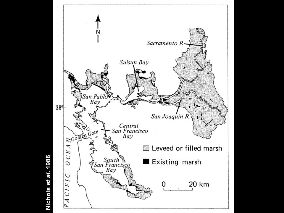 Presence of Native Oysters Redwood Creek to Vallejo year% of sitescommon at 199357% of 141 199477% of 131 199679% of 141 199775% of 122