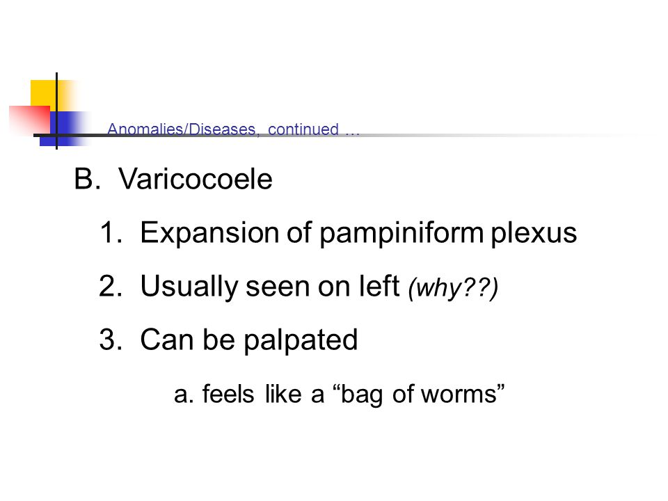 Anomalies/Diseases, continued … B. Varicocoele 1. Expansion of pampiniform plexus 2. Usually seen on left (why??) 3. Can be palpated a. feels like a ""