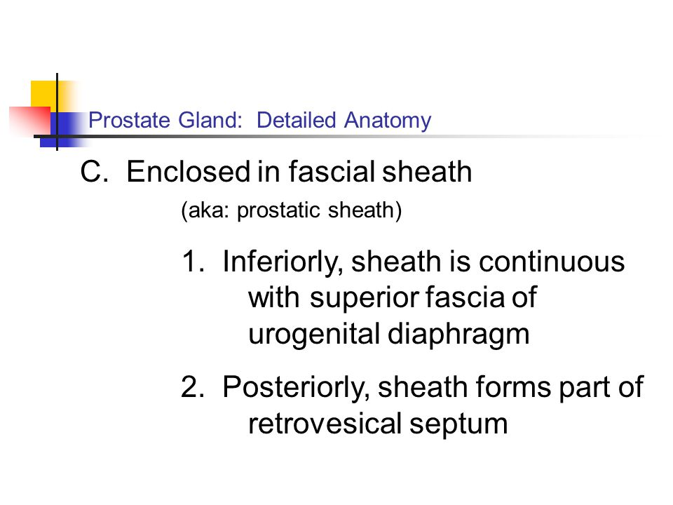 Prostate Gland: Detailed Anatomy C. Enclosed in fascial sheath (aka: prostatic sheath) 1. Inferiorly, sheath is continuous with superior fascia of uro