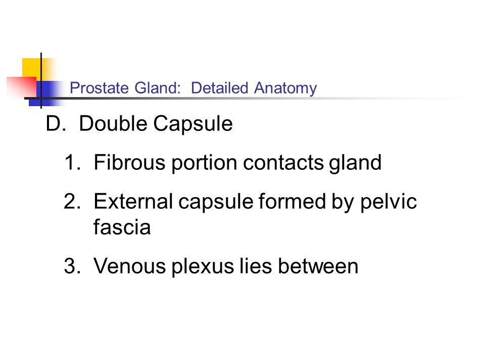 Prostate Gland: Detailed Anatomy D. Double Capsule 1. Fibrous portion contacts gland 2. External capsule formed by pelvic fascia 3. Venous plexus lies