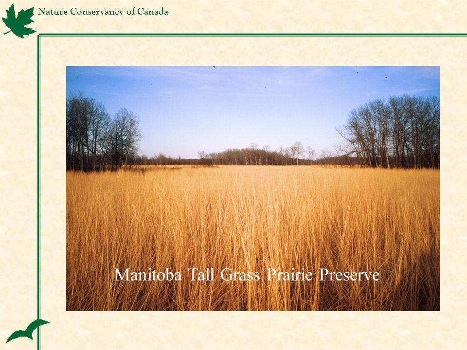 Nature Conservancy of Canada Manitoba Tall Grass Prairie Preserve
