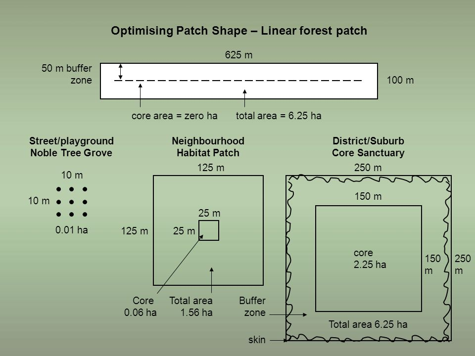 Optimising Patch Shape – Linear forest patch 625 m 100 m 50 m buffer zone core area = zero hatotal area = 6.25 ha 25 m 125 m Total area 1.56 ha Core 0.06 ha Neighbourhood Habitat Patch Street/playground Noble Tree Grove District/Suburb Core Sanctuary 10 m 0.01 ha 250 m 150 m 250 m 150 m core 2.25 ha Total area 6.25 ha Buffer zone skin