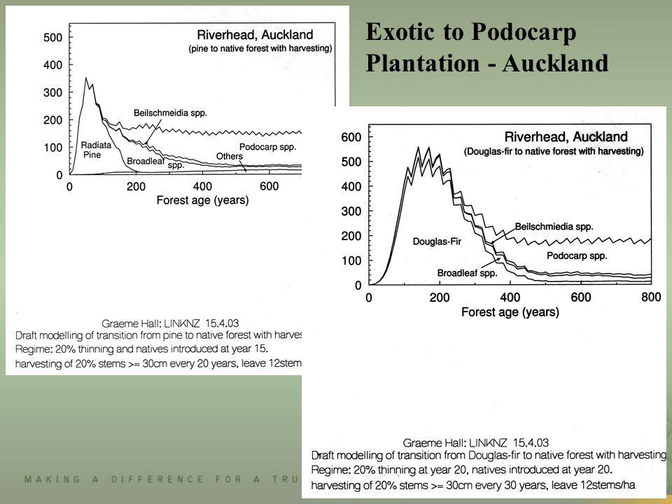 Exotic to Podocarp Plantation - Auckland