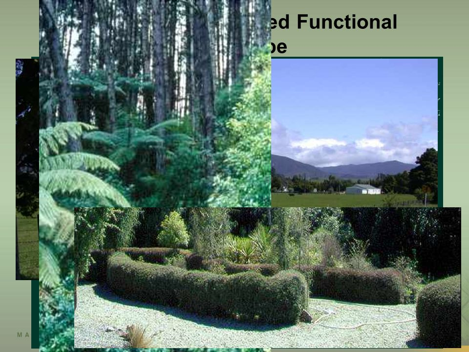 Prospective Integrated Functional Landscape