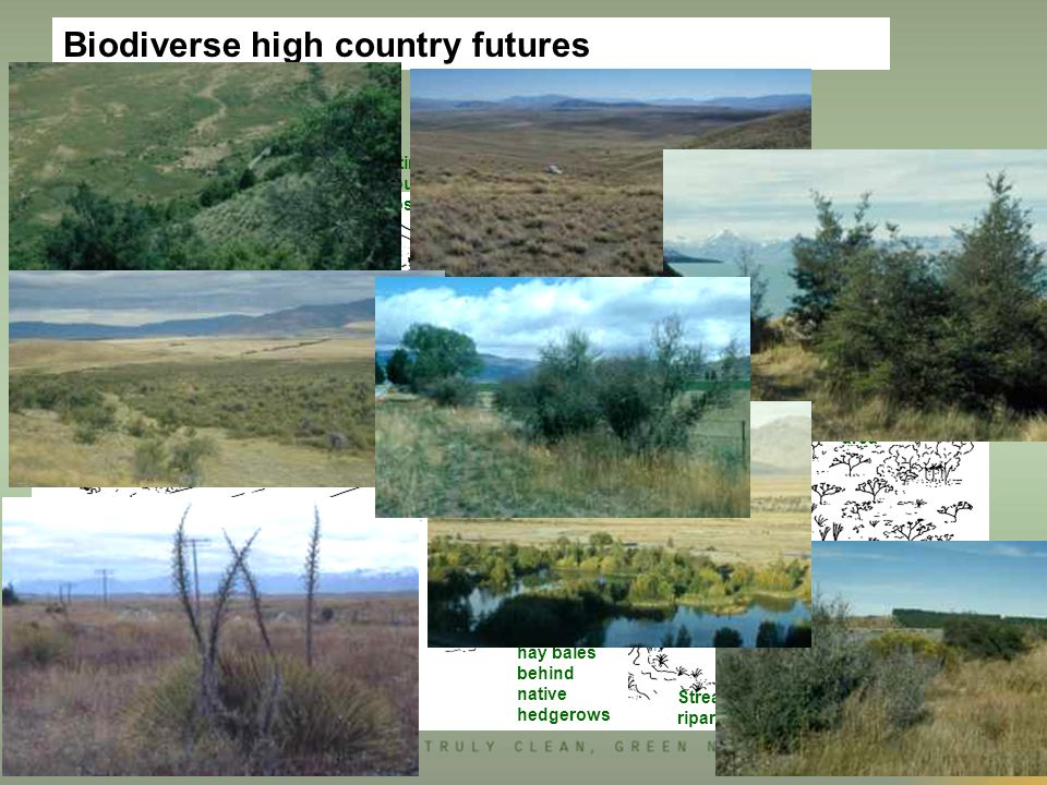 Biodiverse high country futures Moraine with native shrubs & woodland remnant native veg, regenerating retirement fence boundary obscured exotic plantation surrounded by nz trees Stream with riparian vegetation wetland lake highway protected natural area native hedgerows shelter belt with native border of shrubs Homestead (opportunity for native rockeries) beech short tussock grazed matagouri woodland hay bales behind native hedgerows
