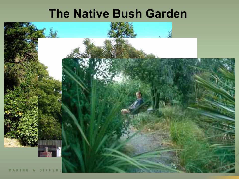 The Native Bush Garden