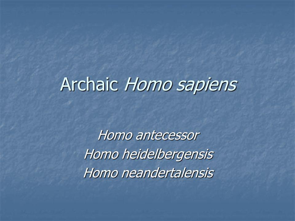 Archaic Homo sapiens Homo antecessor Homo heidelbergensis Homo neandertalensis