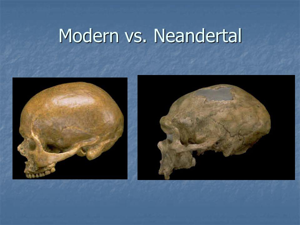 Modern vs. Neandertal