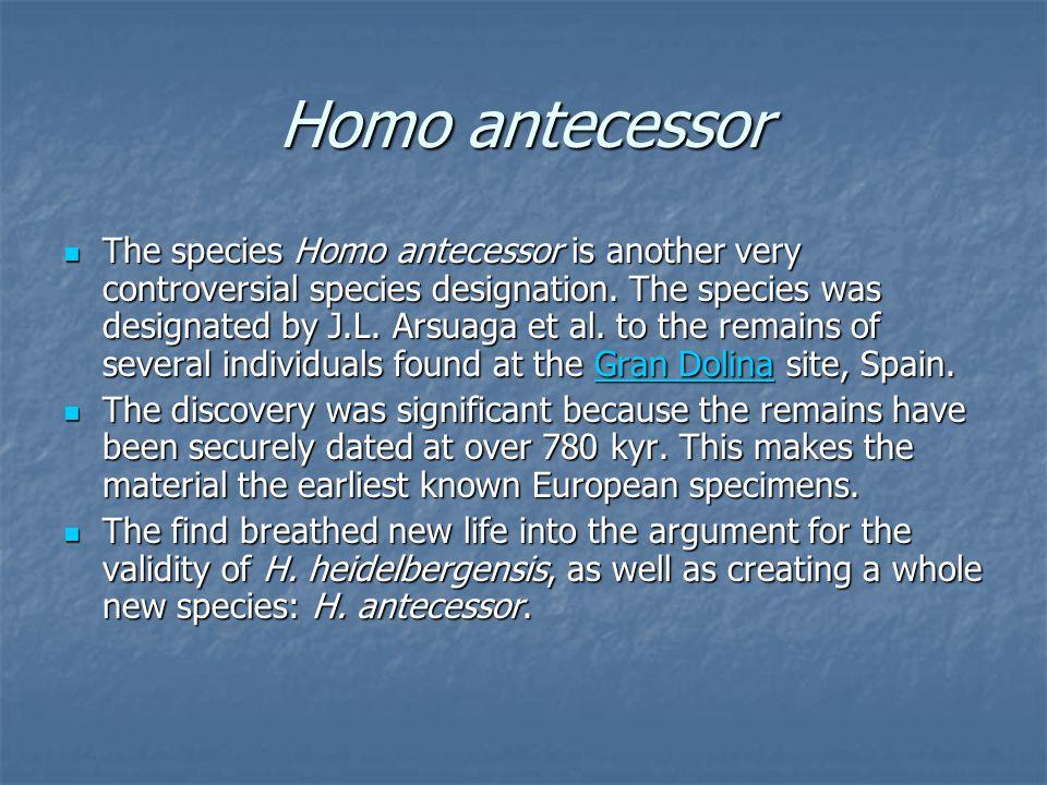 Homo antecessor The species Homo antecessor is another very controversial species designation.