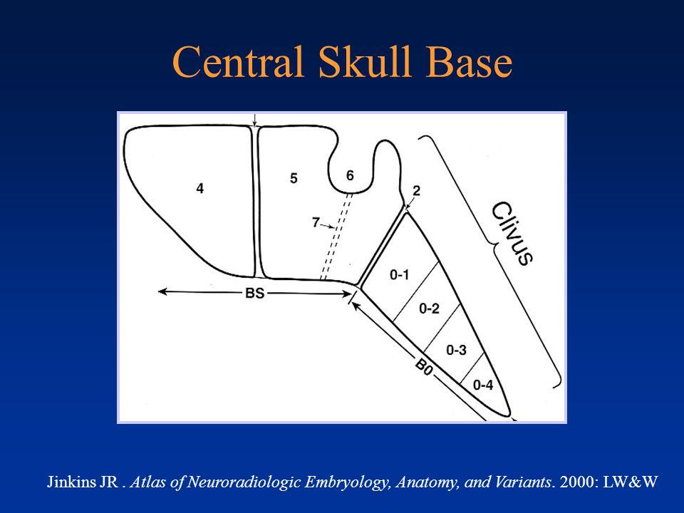 Newborn Central Skull Base Newborn