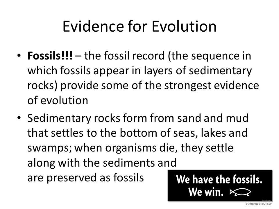Evidence for Evolution Fossils!!.