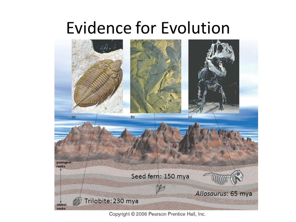 Evidence for Evolution Trilobite: 230 mya Seed fern: 150 mya Allosaurus: 65 mya