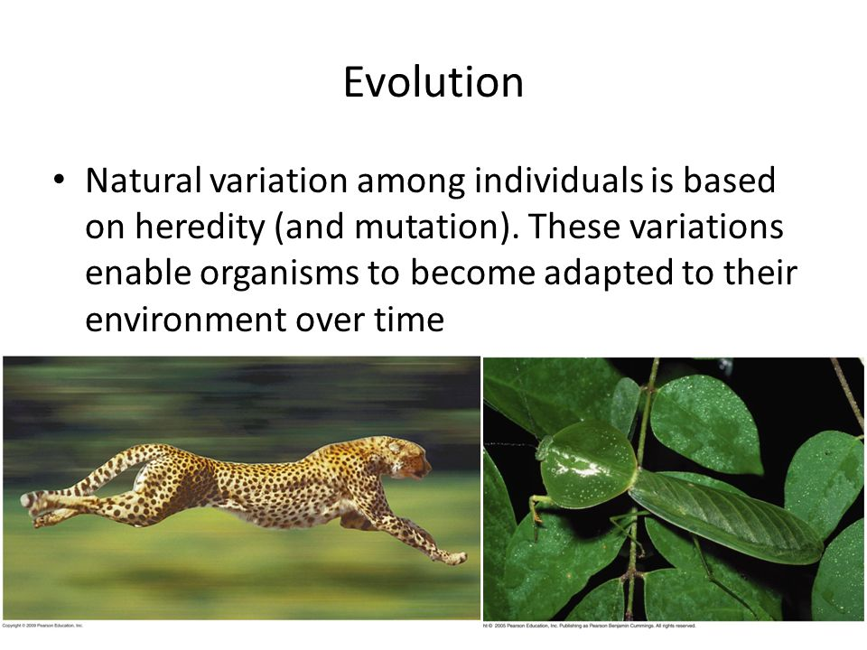Evolution Natural variation among individuals is based on heredity (and mutation).