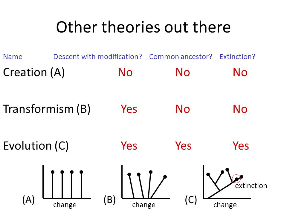 Other theories out there Name Descent with modification? Common ancestor? Extinction? Creation (A) NoNoNo Transformism (B) YesNoNo Evolution (C) YesYe
