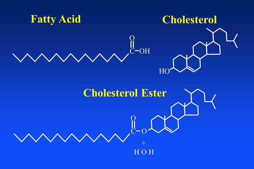 HO Cholesterol O Cholesterol Ester Fatty Acid OHC O + H O H C O