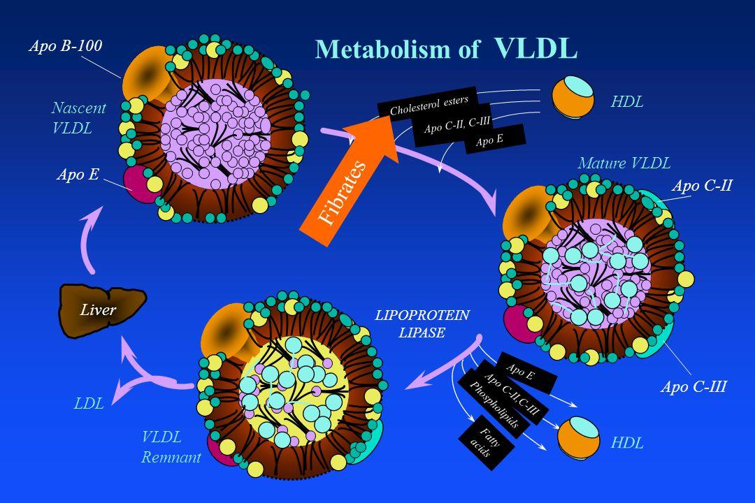 Metabolism of VLDL Apo B-100 Apo E Nascent VLDL Mature VLDL VLDL Remnant LDL Liver LIPOPROTEIN LIPASE HDL Cholesterol esters Apo E Apo C-II,C-III Phospholipids Fatty acids HDL Apo C-II, C-III Apo C-III Apo C-II Fibrates