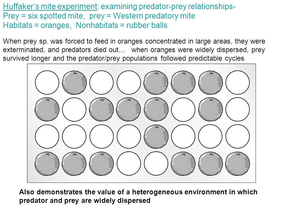 Huffaker's mite experiment: examining predator-prey relationships- Prey = six spotted mite, prey = Western predatory mite Habitats = oranges, Nonhabitats = rubber balls When prey sp.