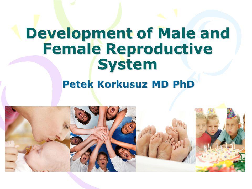 Development of Male and Female Reproductive System Petek Korkusuz MD PhD