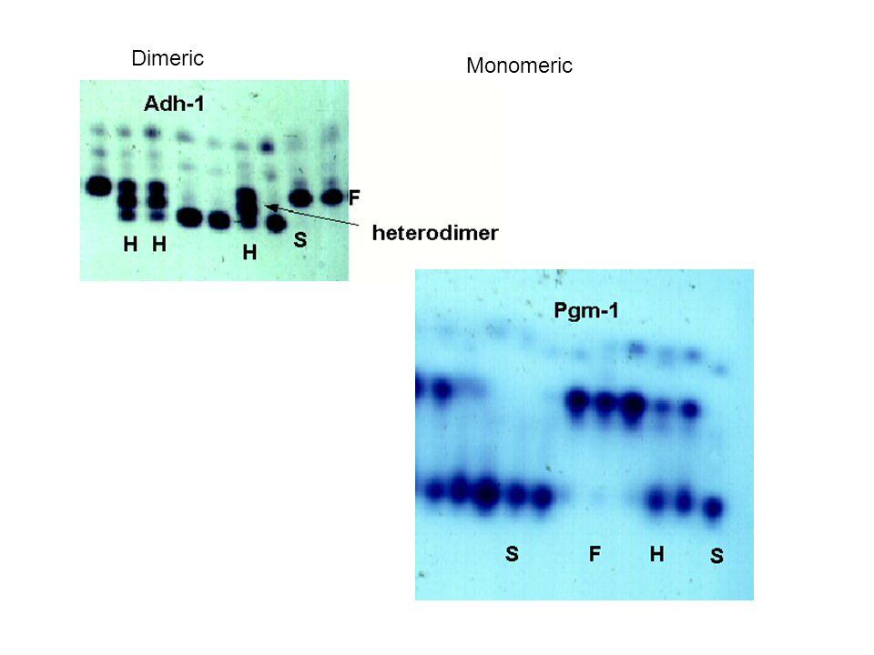 Dimeric Monomeric