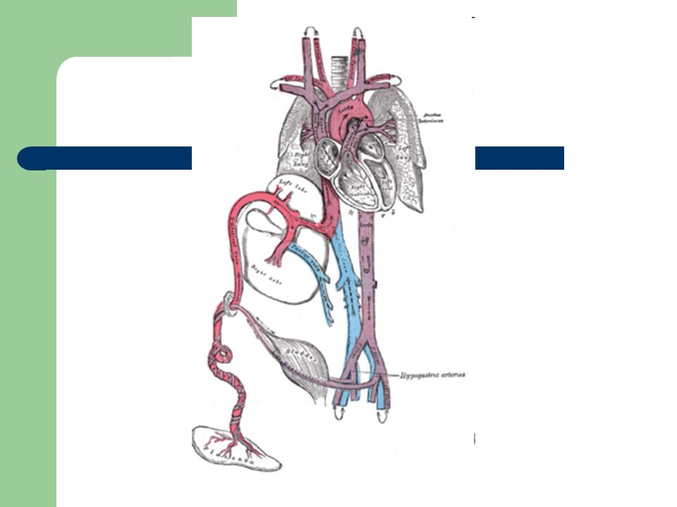 Abnormalities of the umbilical cord Distortional abnormalities – loops, knots (true or false), torsions and twists True knot