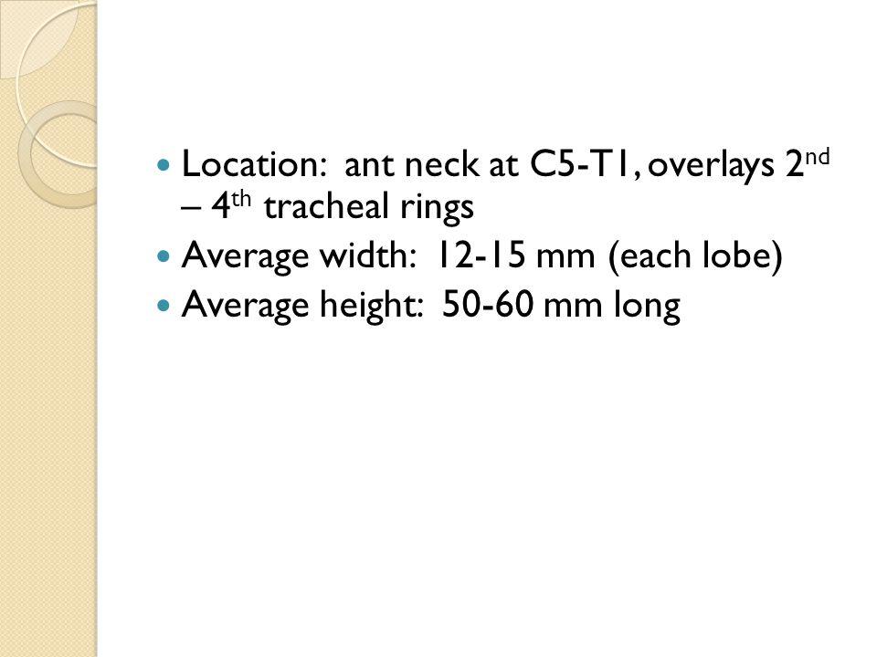 Anatomy of the Thyroid Gland