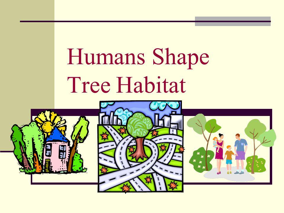 Humans Shape Tree Habitat