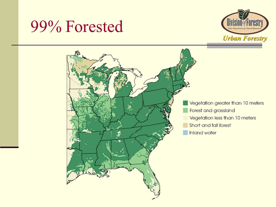 99% Forested