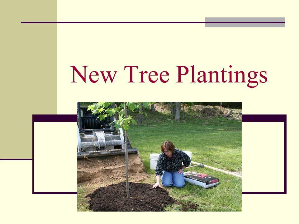New Tree Plantings