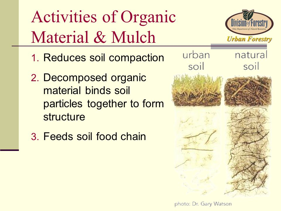 Activities of Organic Material & Mulch 1. Reduces soil compaction 2.