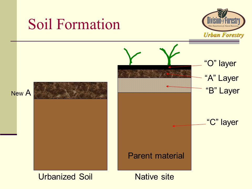O layer A Layer B Layer C layer Parent material Urbanized SoilNative site New A Soil Formation