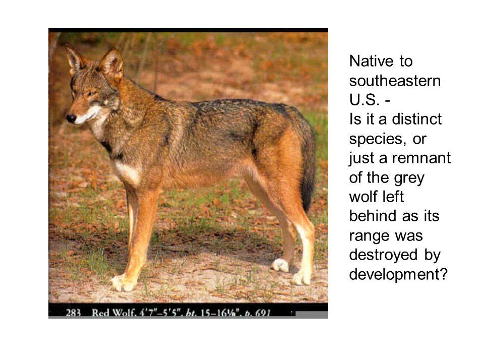 Native to southeastern U.S.