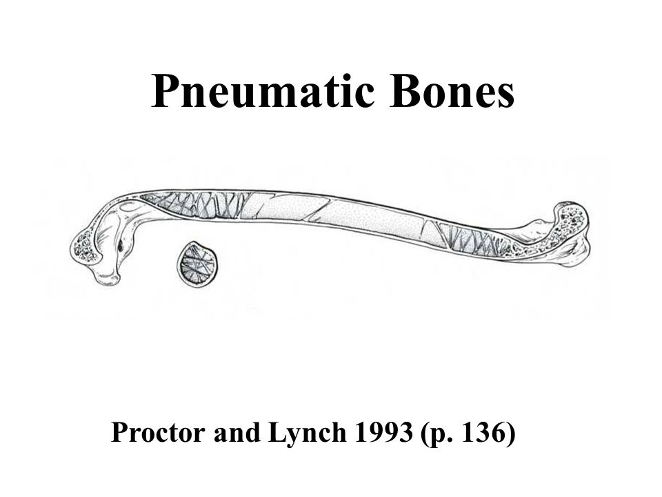 Pneumatic Bones Proctor and Lynch 1993 (p. 136)