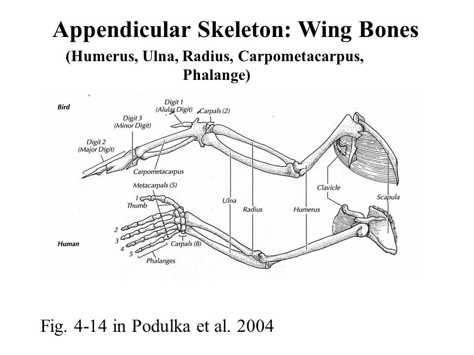 Fig. 4-14 in Podulka et al.