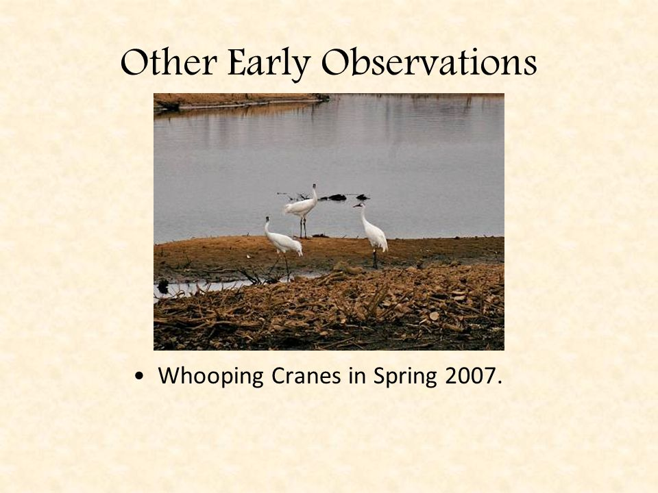 Other Early Observations Whooping Cranes in Spring 2007.