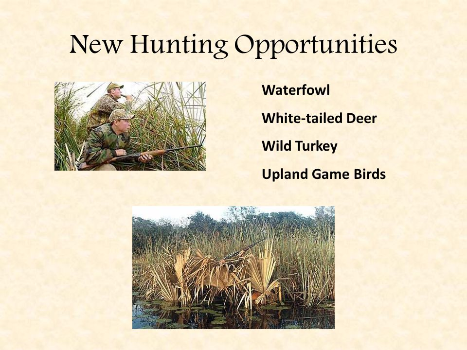 New Hunting Opportunities Waterfowl White-tailed Deer Wild Turkey Upland Game Birds