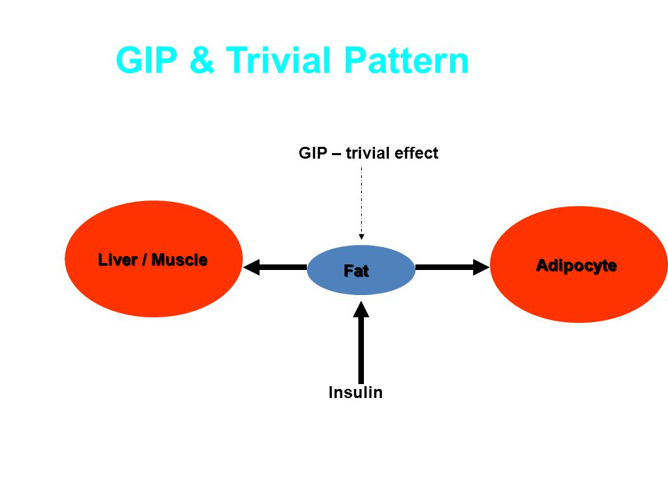 GIP & Trivial Pattern Liver / Muscle Adipocyte Adipocyte Insulin GIP – trivial effect Fat Fat