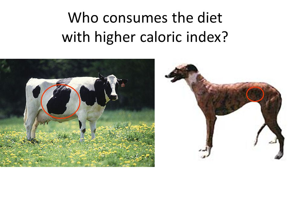 Who consumes the diet with higher caloric index?