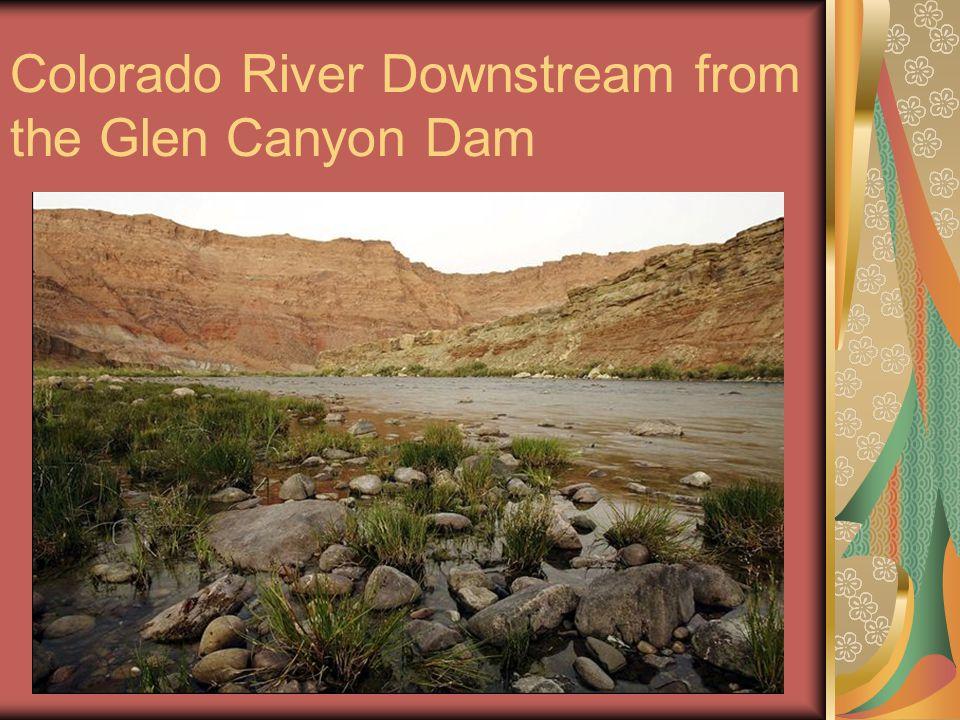 Colorado River Downstream from the Glen Canyon Dam